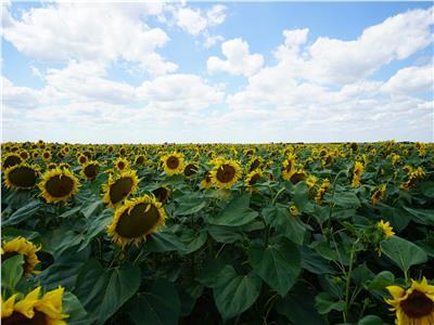 1450 ha teren agricol
